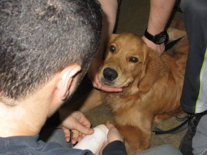 pet first aid distance learning