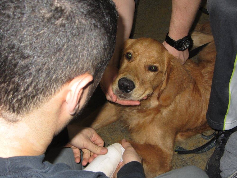 Online Pet First Aid Learning Pet First Aid Online