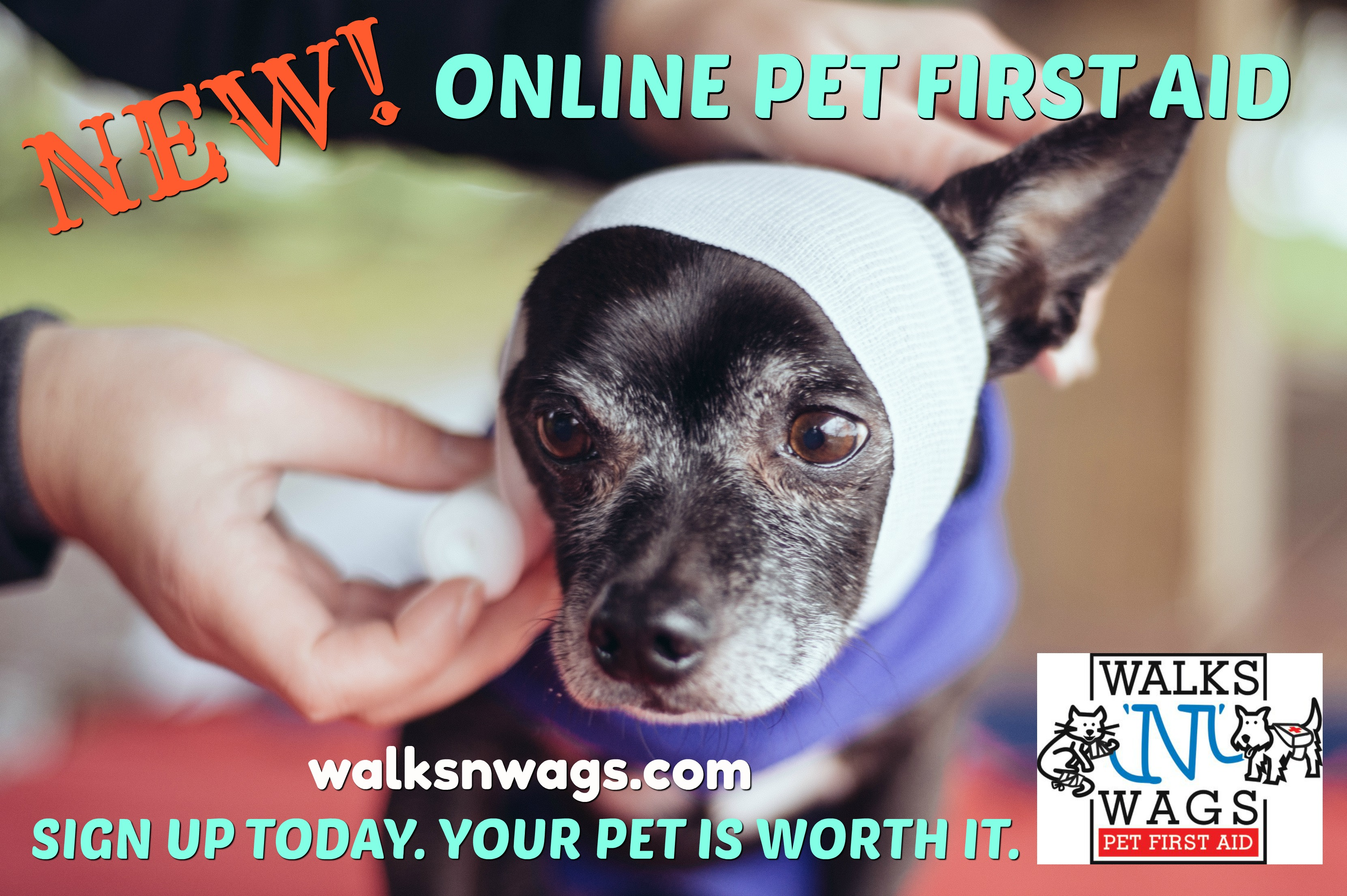 Pet first aid course 4 dog cats canada us pet first aid introducing online walks n wags pet first aid certification 1betcityfo Choice Image