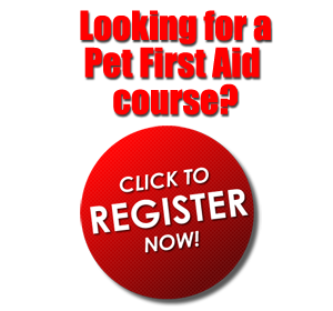 Pet First Aid Course 4 Dog & Cats Canada U S  Pet First Aid